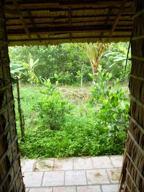 Thick jungle underbrush